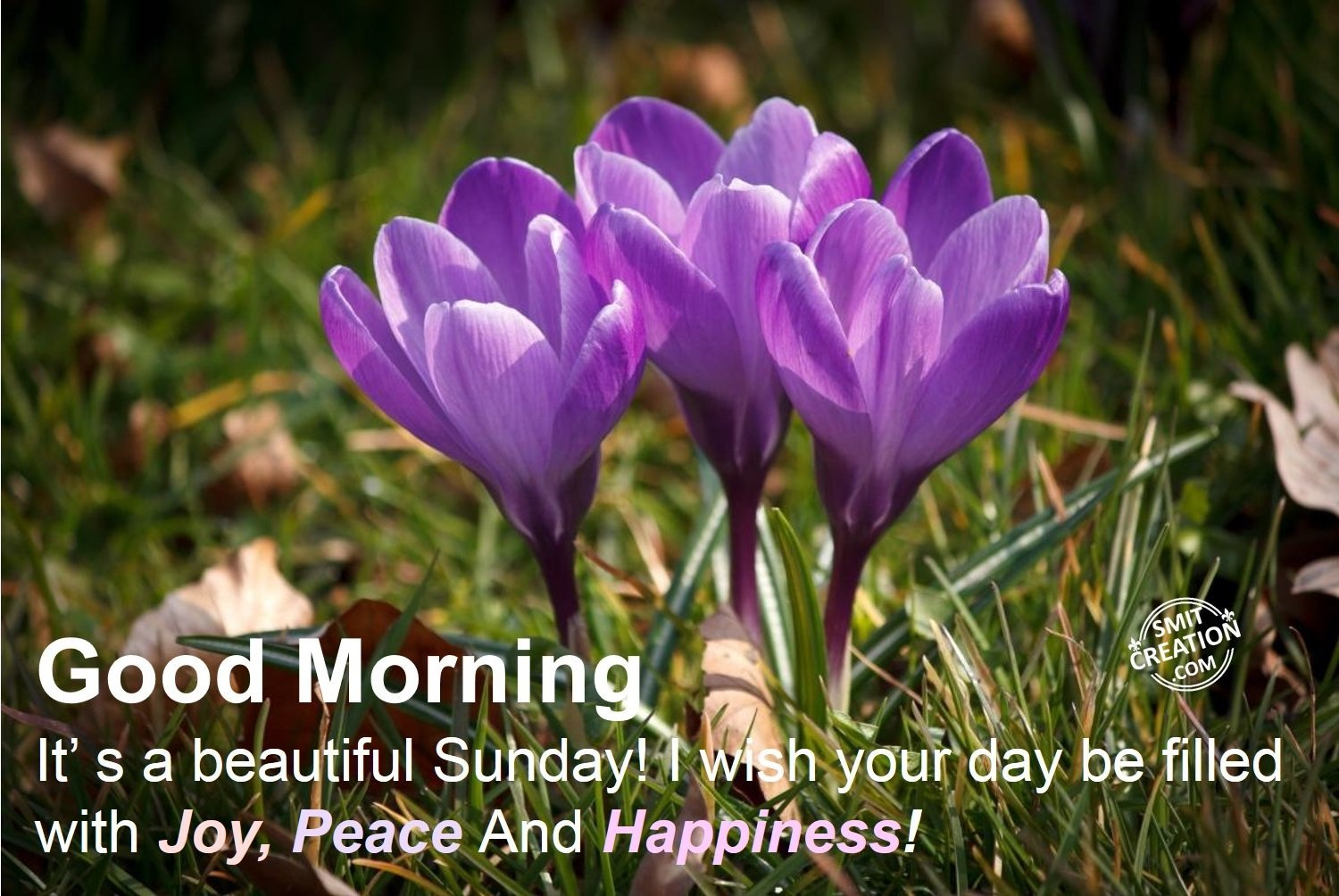 Good morning flowers pictures and graphics smitcreation page 14 download image izmirmasajfo