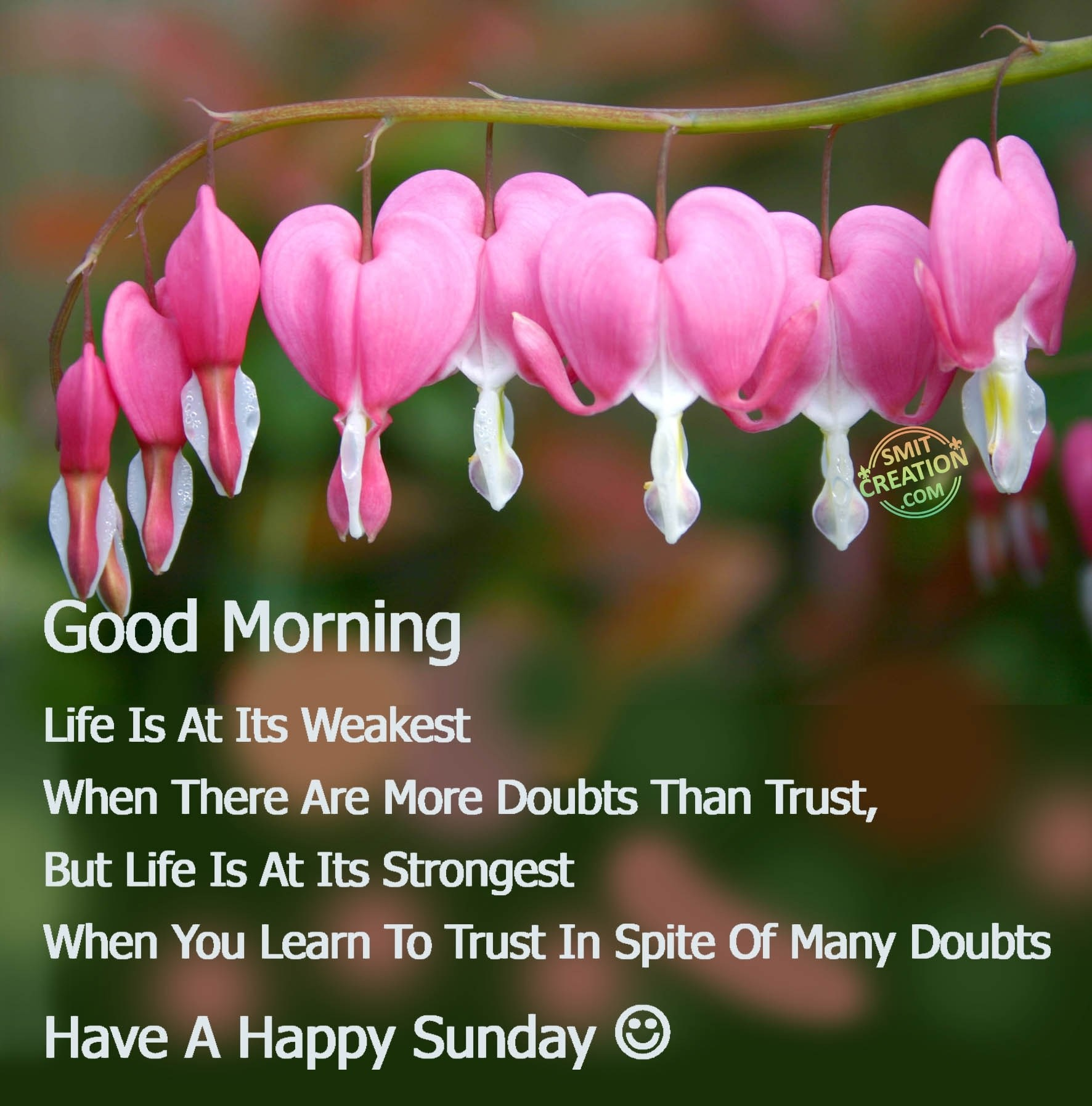 Good Morning Have A Happy Sunday Smitcreationcom