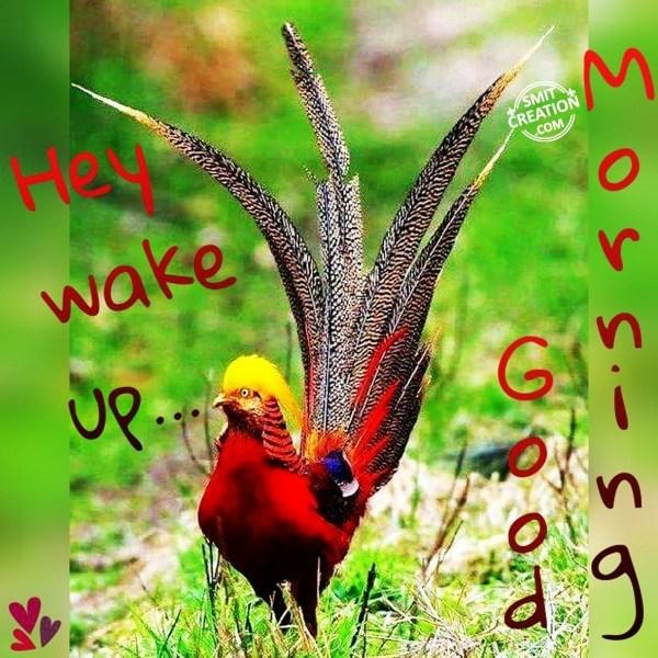 Hey Wake Up... Good Morning
