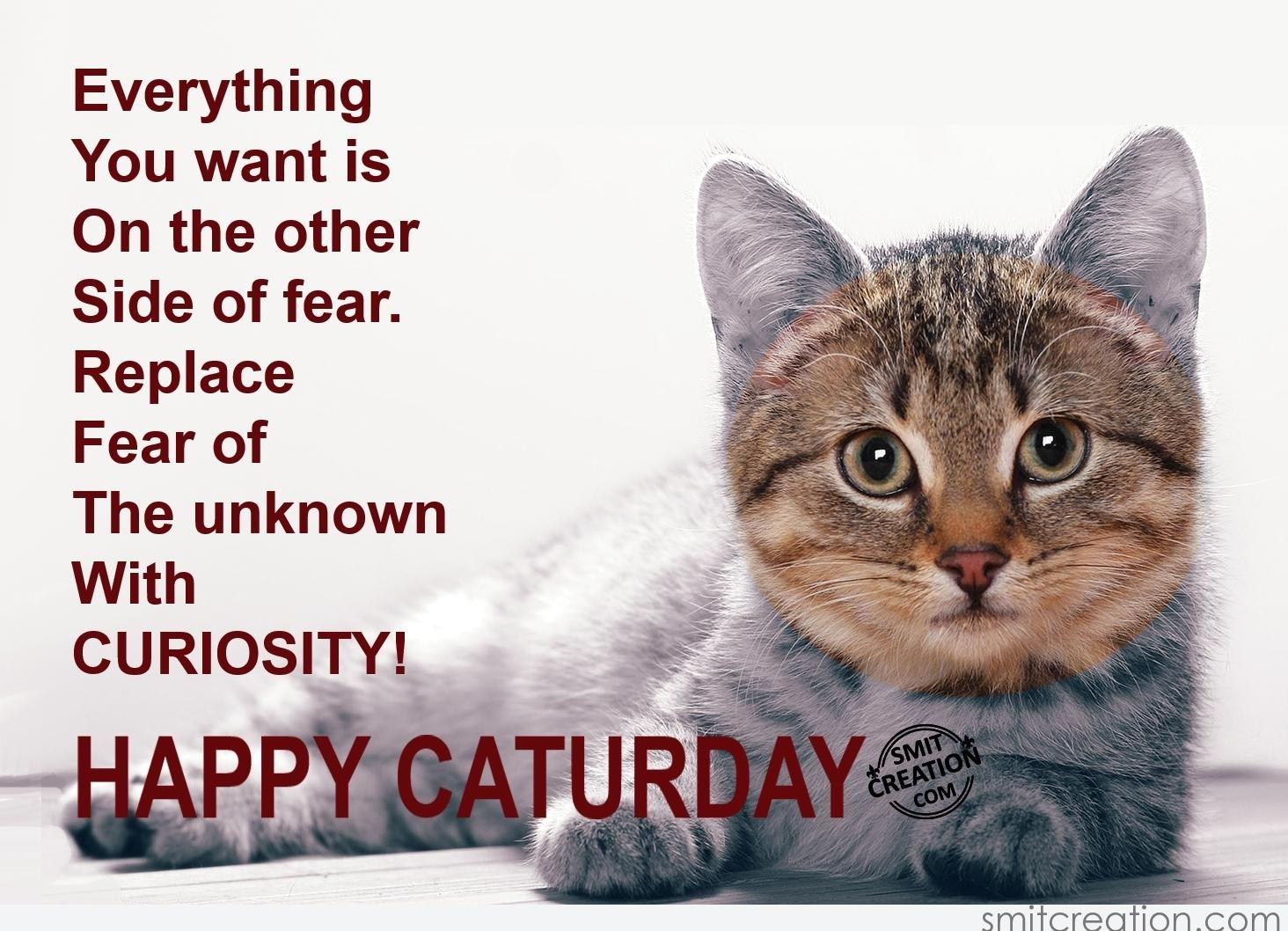 Image result for Happy Caturday with winter images
