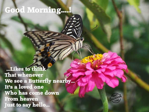Good Morning Flowers Images With Quote