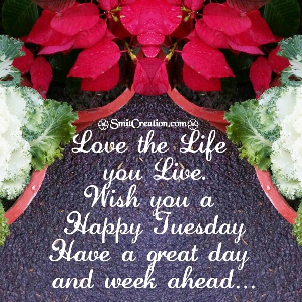 Wish you a Happy Tuesday