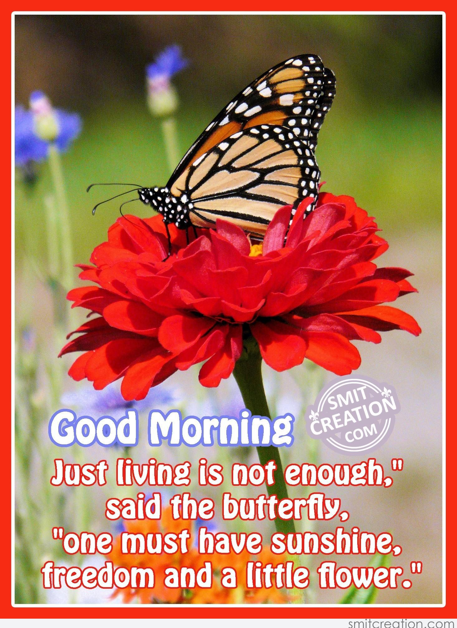 Good morning butterfly messages