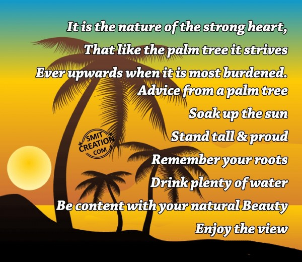 Advice from a Palm Tree
