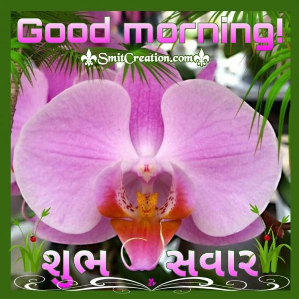 Good Morning - Shubh Savar