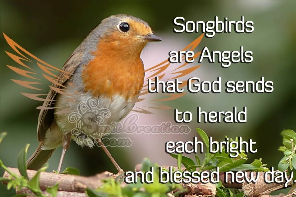Songbirds are Angels