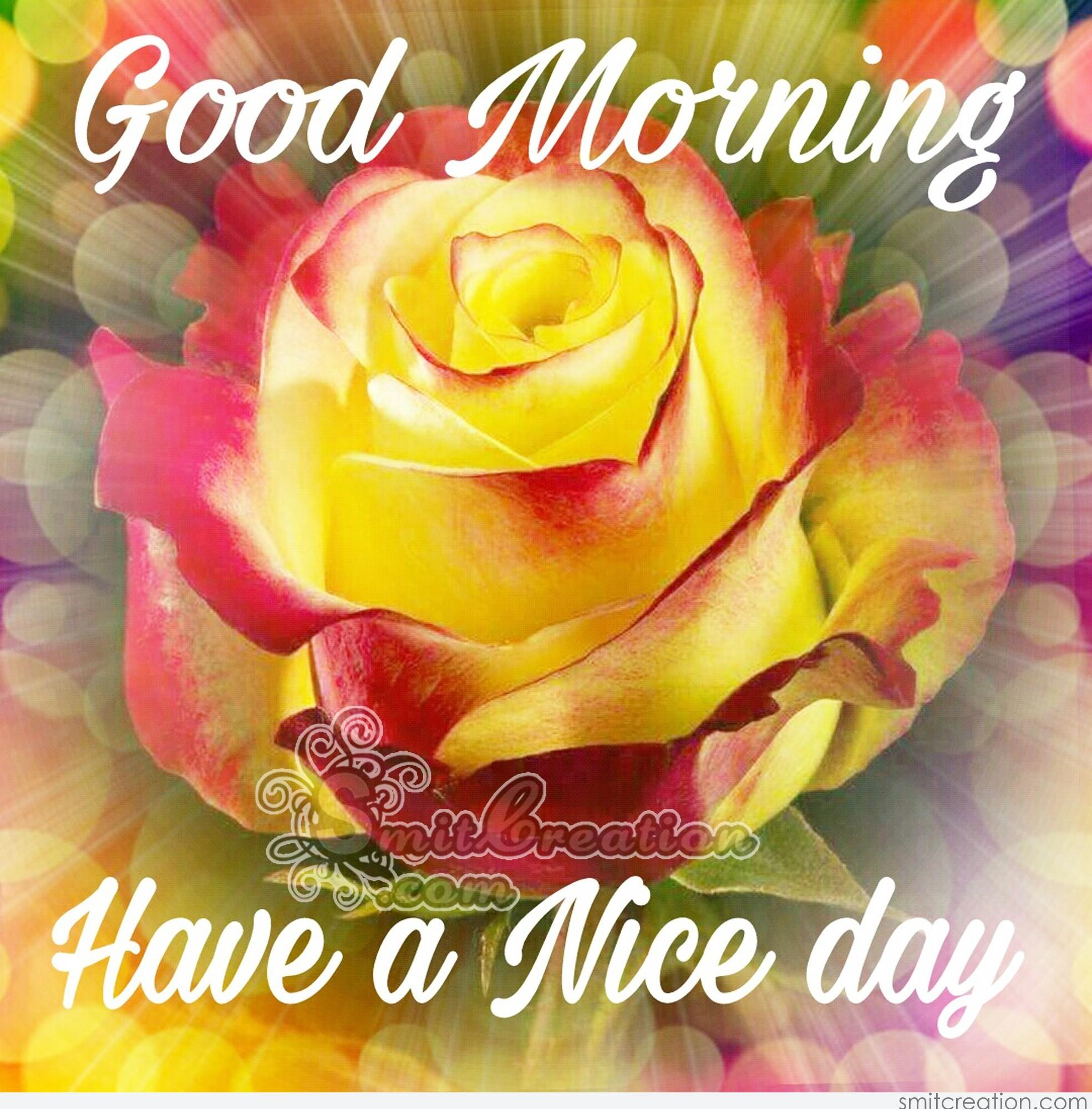 Good Morning Sunday Flowers Images : Good morning flowers pictures and graphics smitcreation