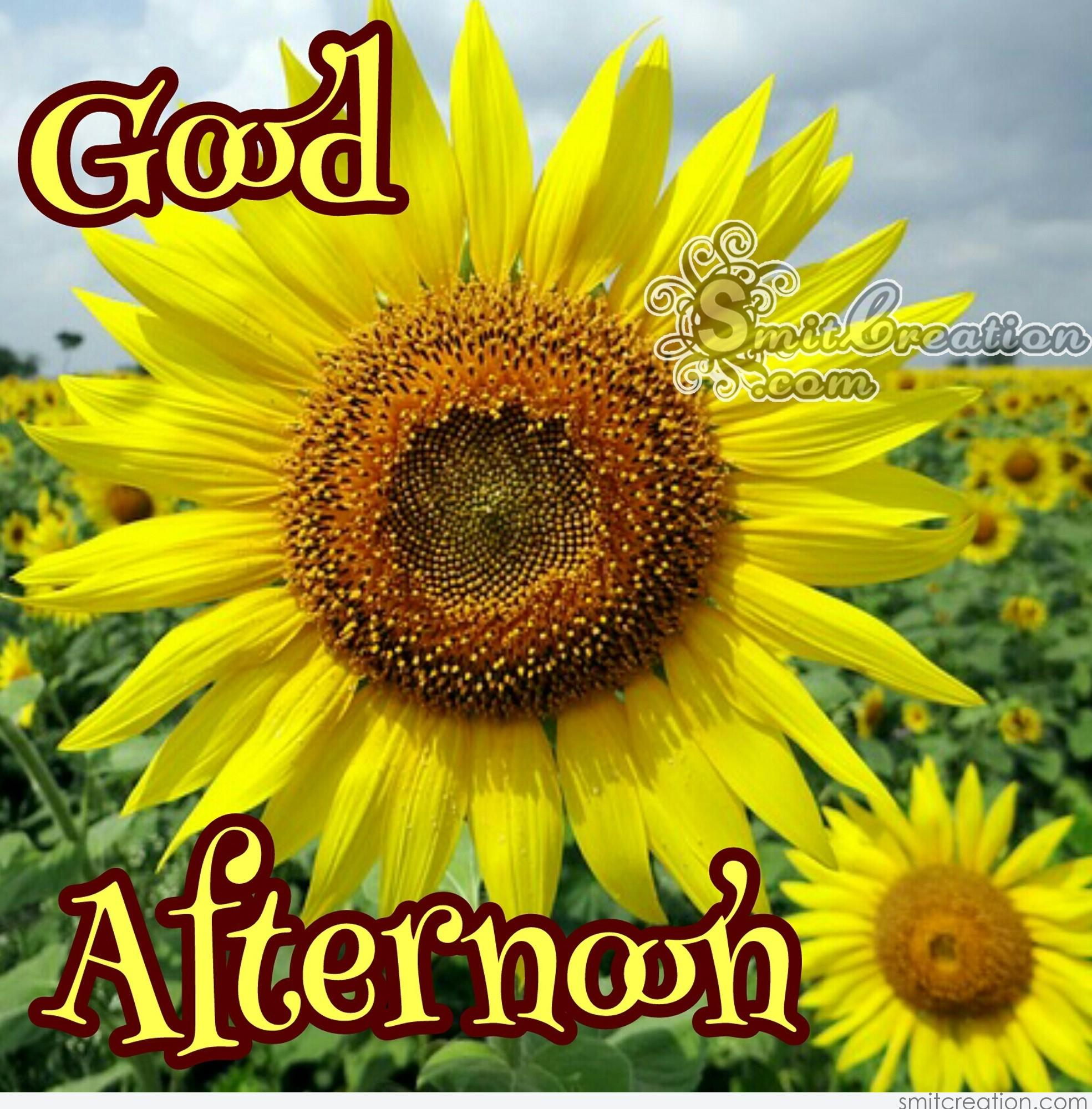Good Afternoon Flower Pictures And Graphics Smitcreation Page 2