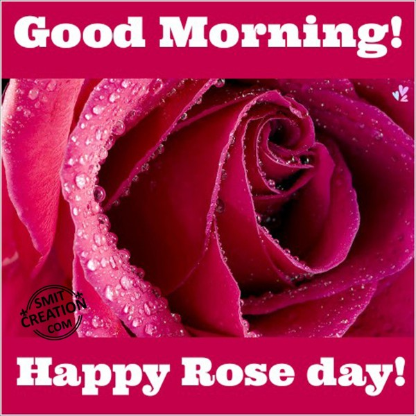 Good Morning Happy Rose Day