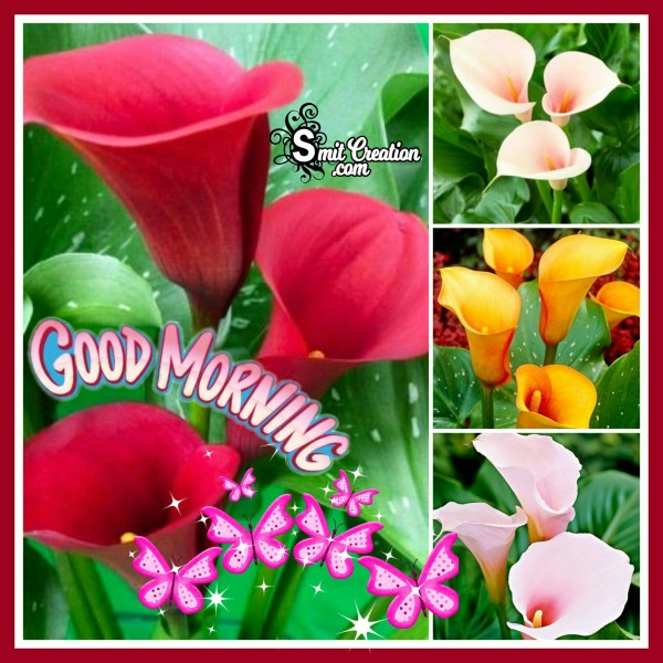 Good Morning Flower Collage