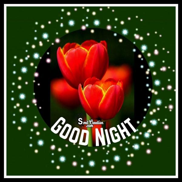 GOOD NIGHT TULIP FLOWER