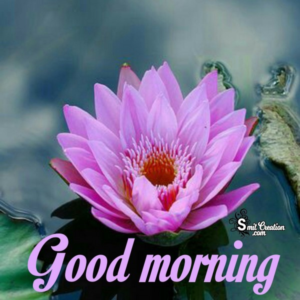 Good Morning Lotus Flower Image