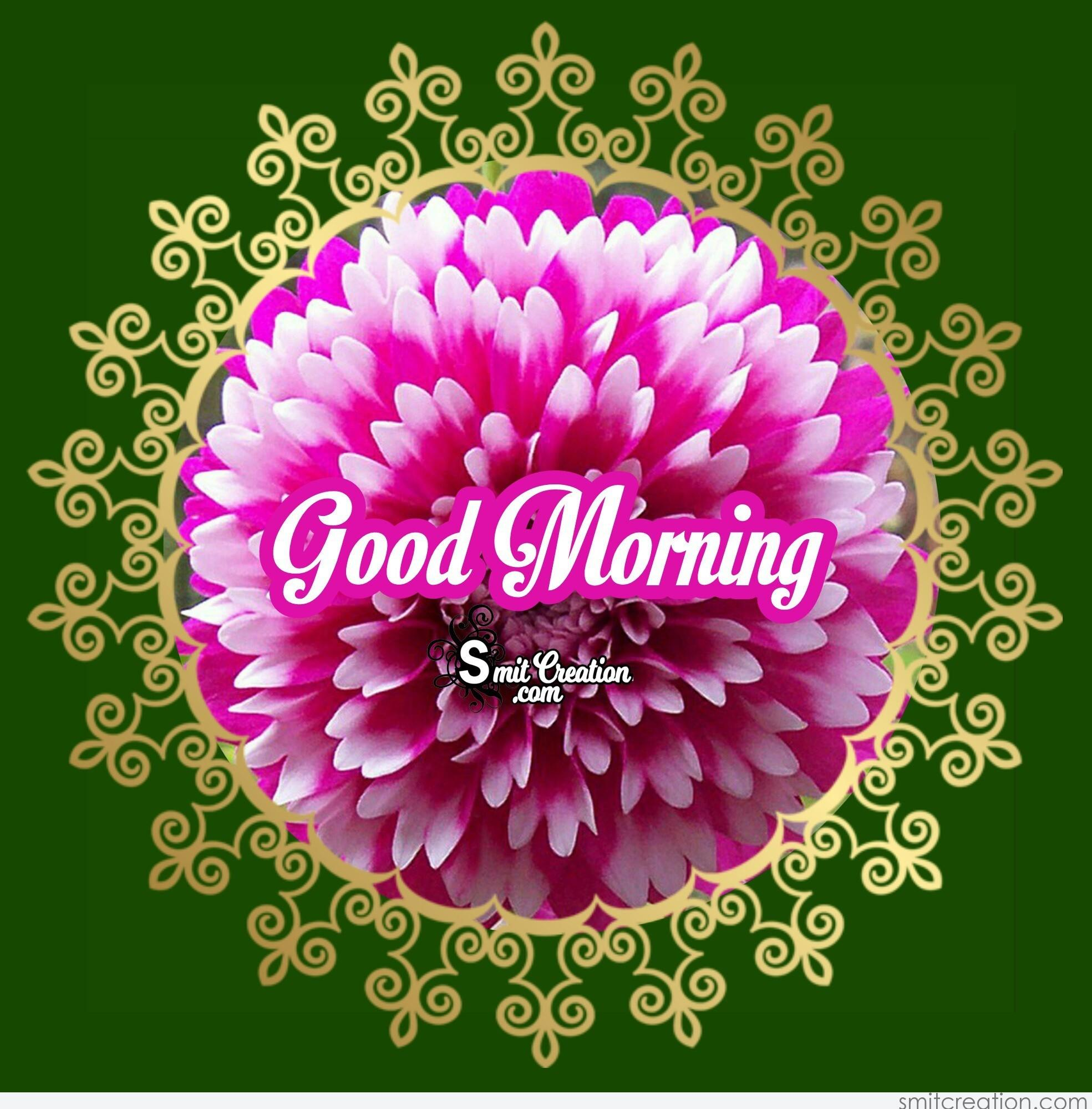 Good Morning Winter Flower : Good morning beautiful flower image smitcreation