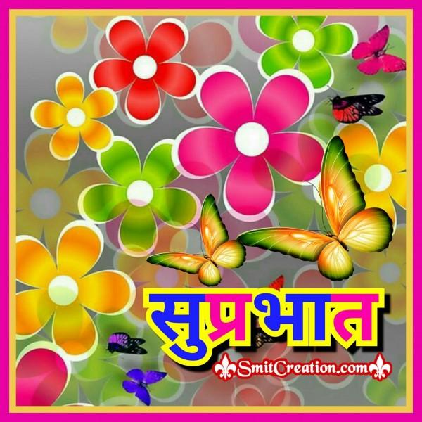 Suprabhat Flower Image