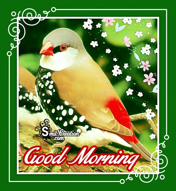 Good Morning Beautiful Bird Image