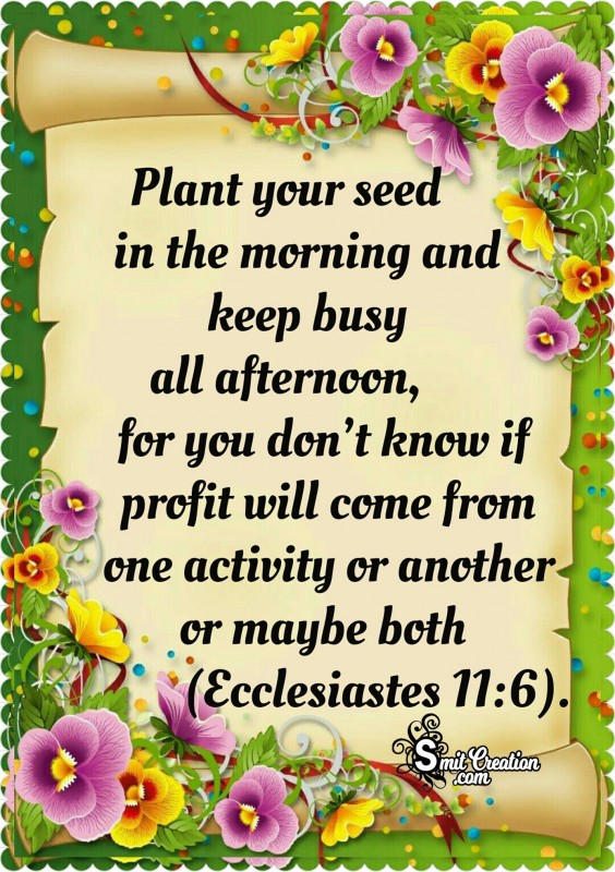 Plant Your Seed In The Morning
