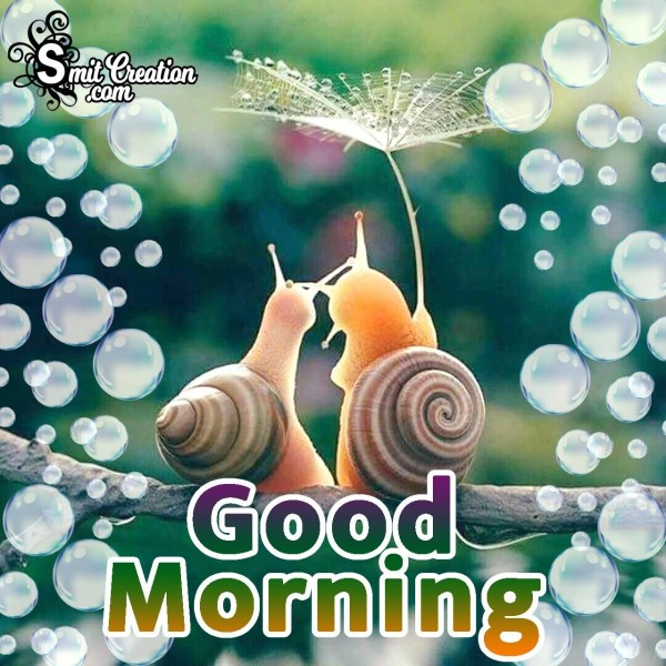 Good Morning Snail Image