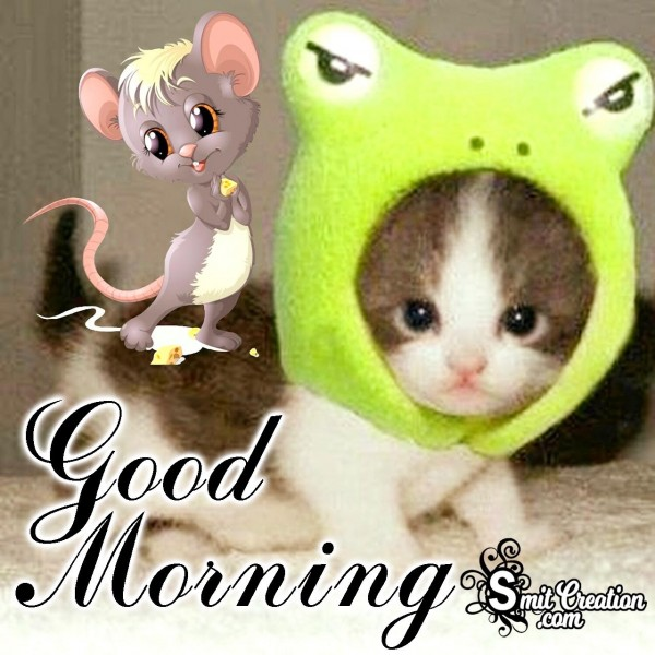 Good Morning Cute Cat