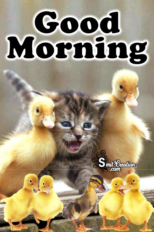 Good Morning Cat With Duck Family