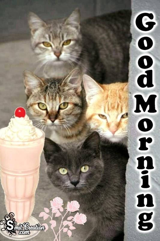 Good Morning Cats