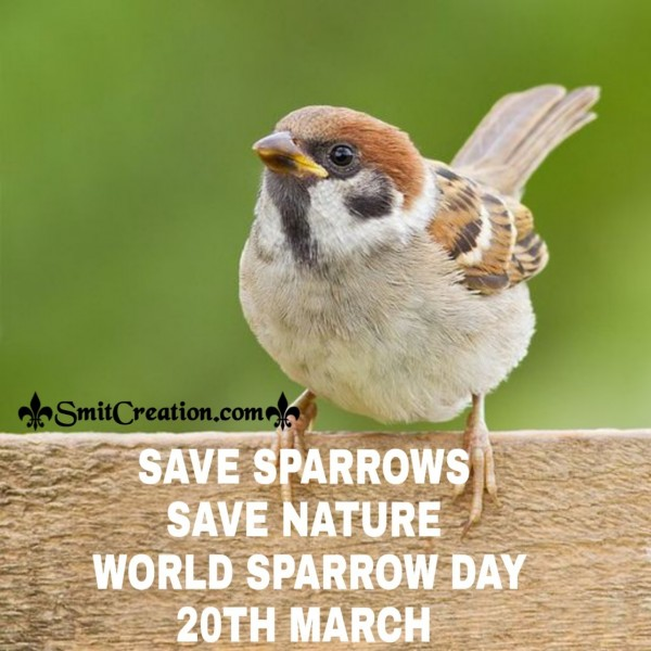 SAVE SPARROWS SAVE NATURE WORLD SPARROW DAY 20TH MARCH