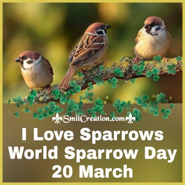 I Love Sparrows World Sparrow Day 20 March