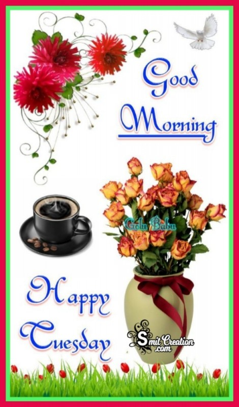 Good Morning Tuesday Pic