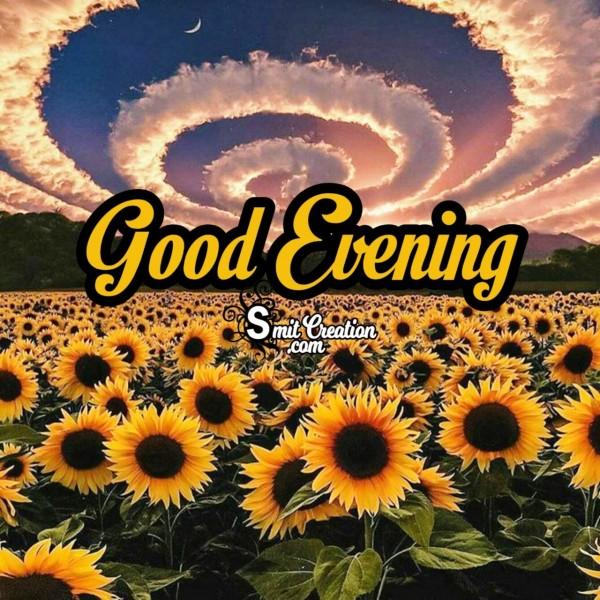 Good Evening Sunflower Pic
