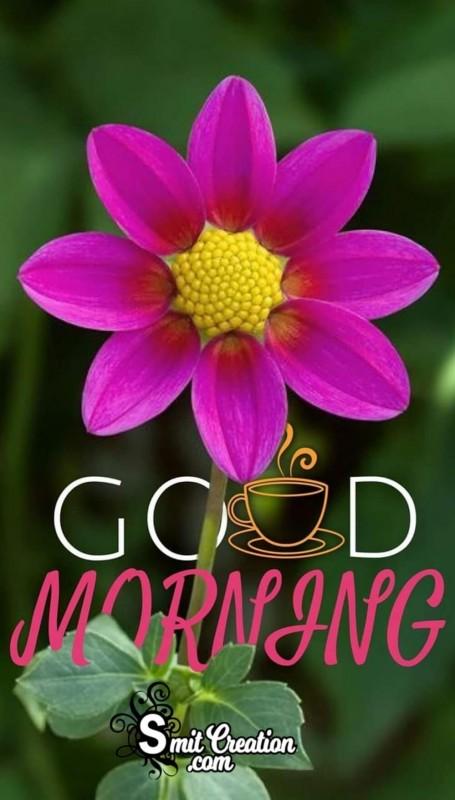 Good Morning Sweet Flower