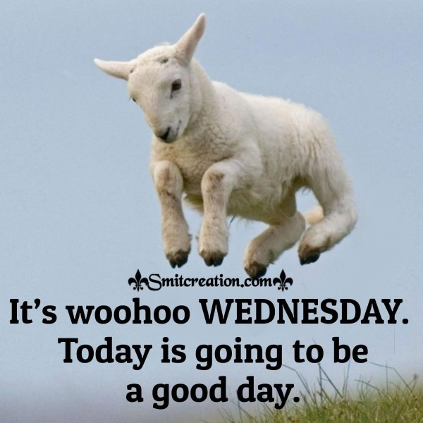 It's Woohoo Wednesday