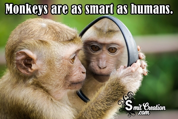 Catchy Monkey Slogans List, Taglines