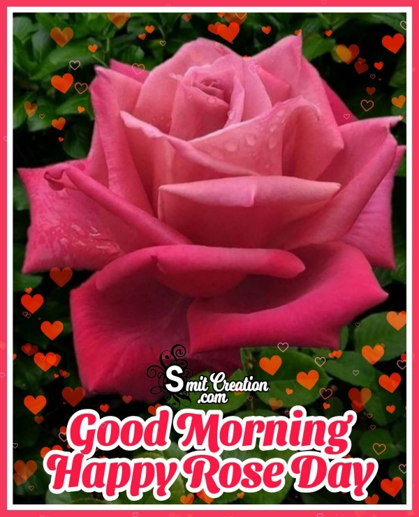 Good Morning Happy Rose Day Images