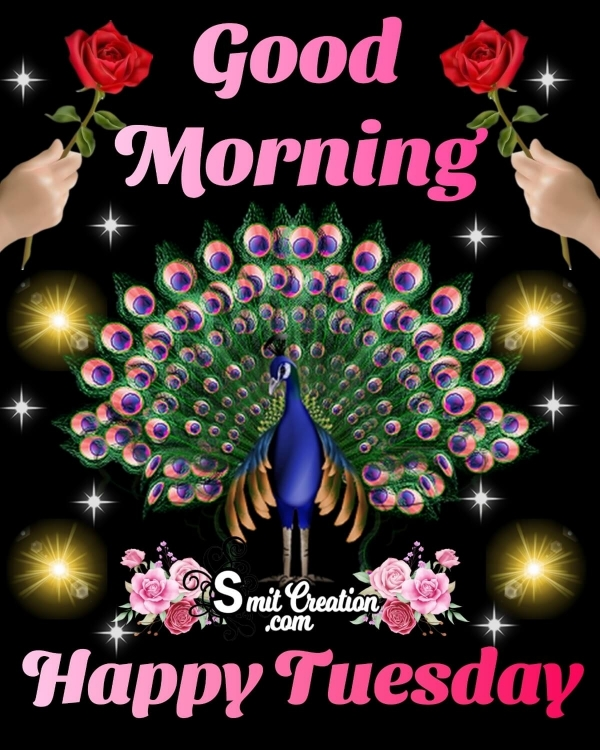 Good Morning Happy Tuesday Peacock Image