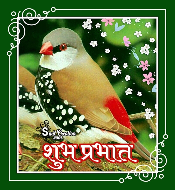 Shubh Prabhat Birds Images