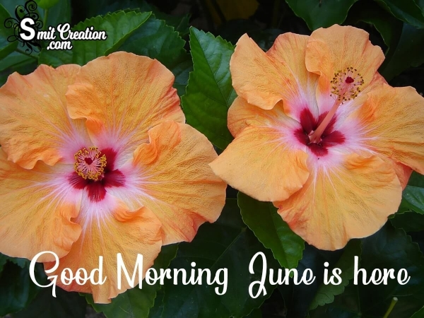 Good Morning June Is Here