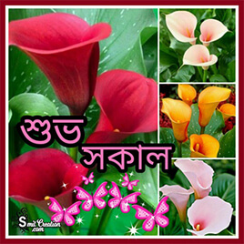 Good Morning Bangla Pictures