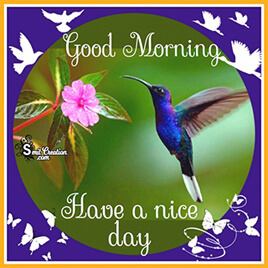 Good Morning Birds Pictures