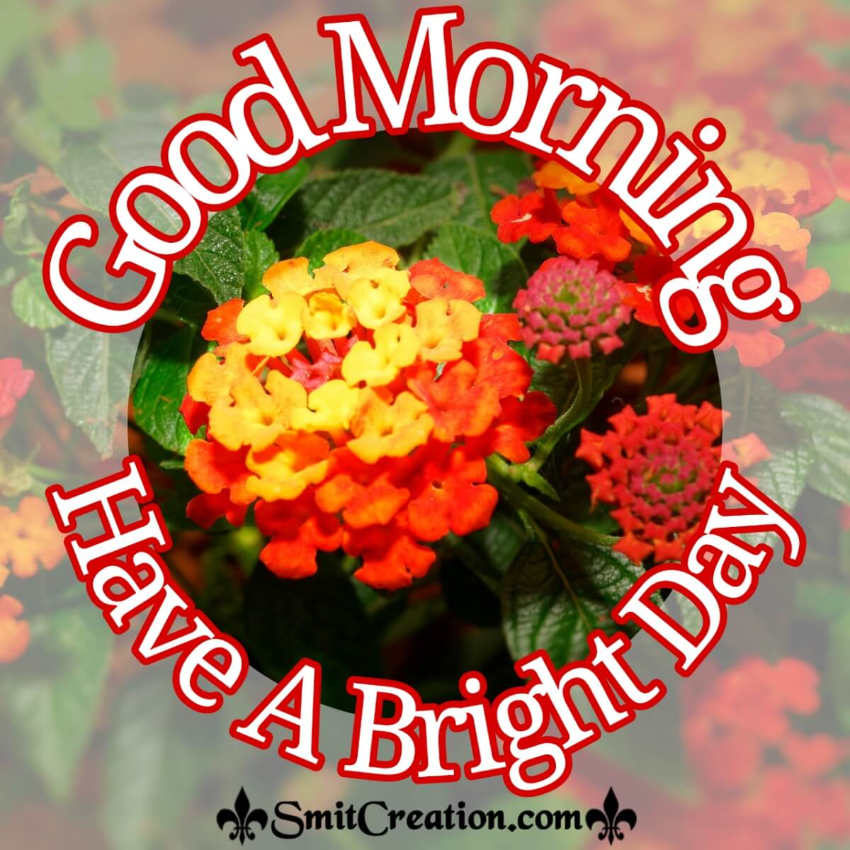 Good Morning Bright Lantana Flower