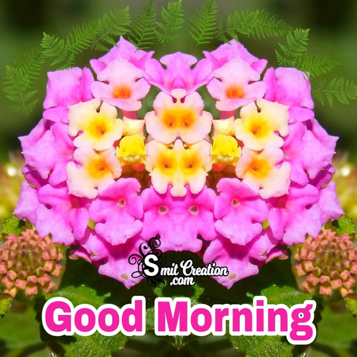 Good Morning Lantana Flower Lovely Image