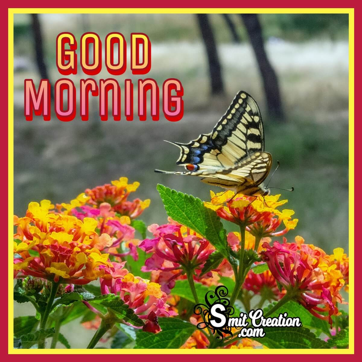 Good Morning Lantana Flower Photo