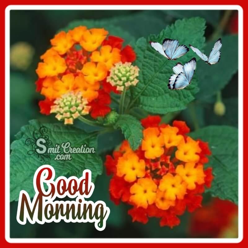 Good Morning Lantana Flower Pic
