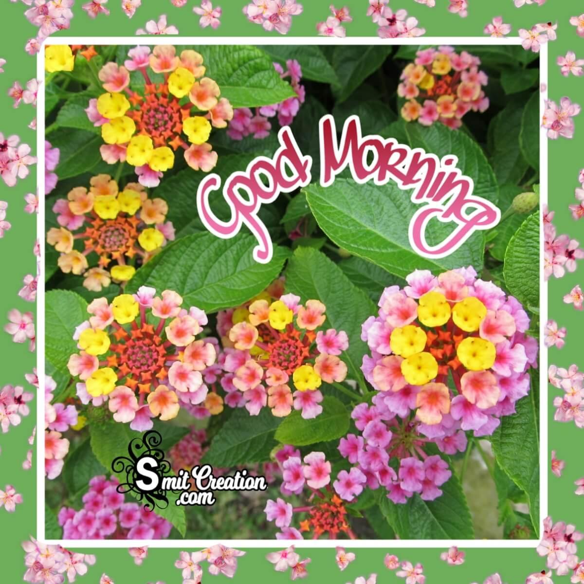 Good Morning Lantana Flowers Image