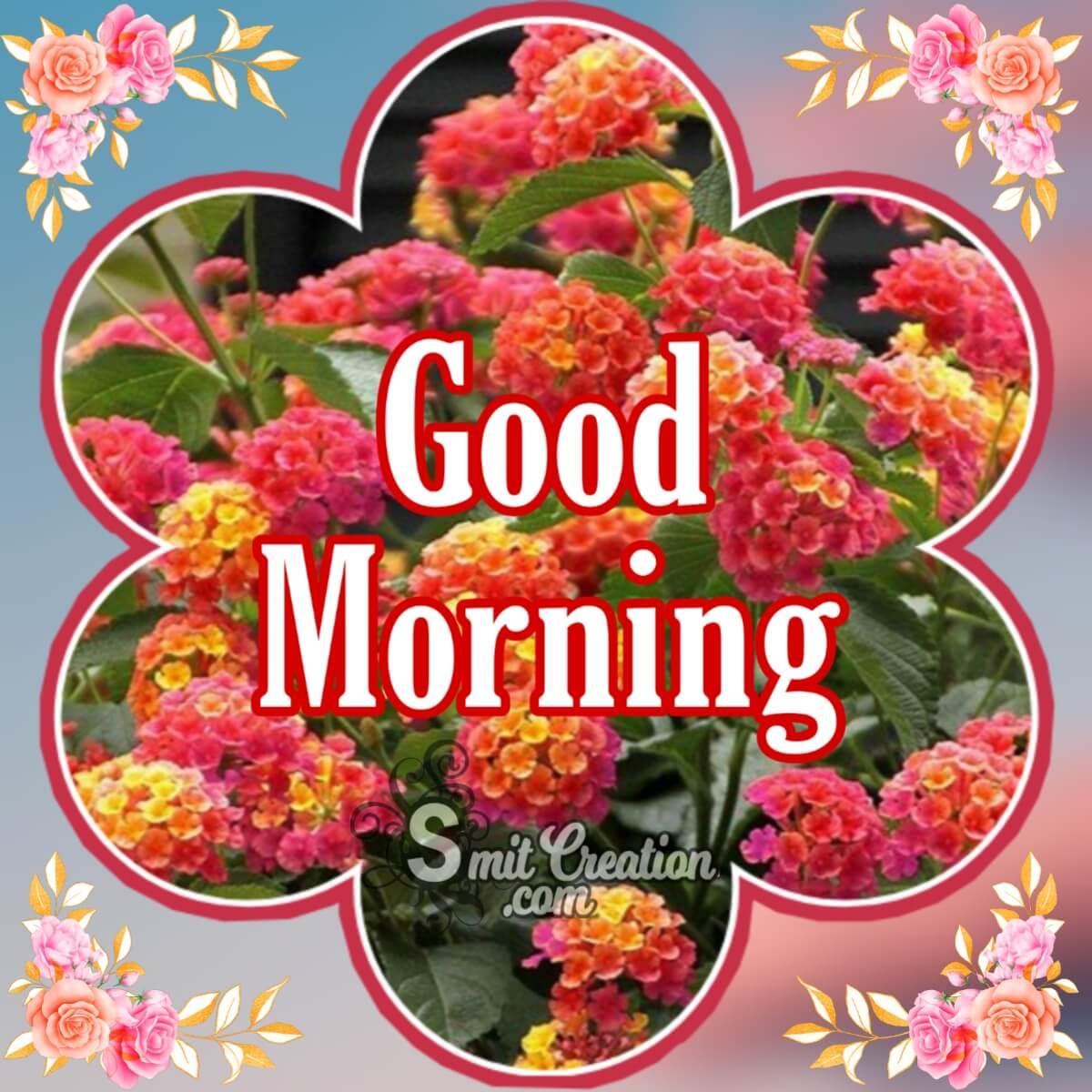 Good Morning Lantana Flowers