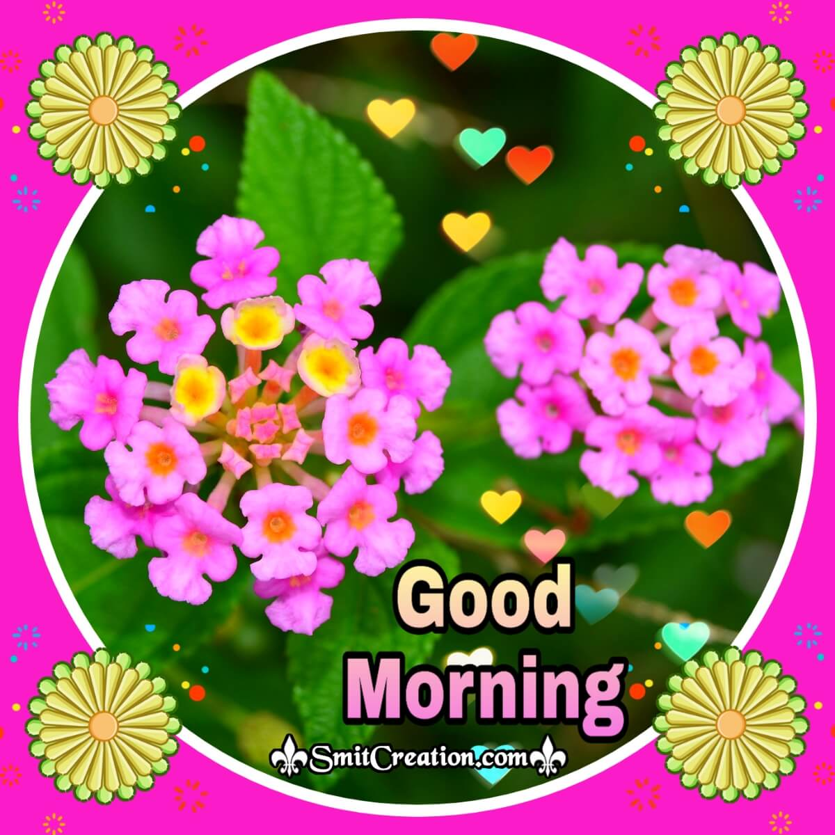 Beautiful Good Morning Lantana Flower Images