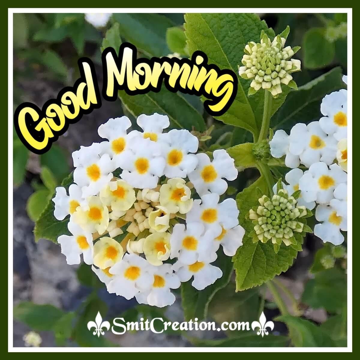 Good Morning White Lantana Flower.jpg
