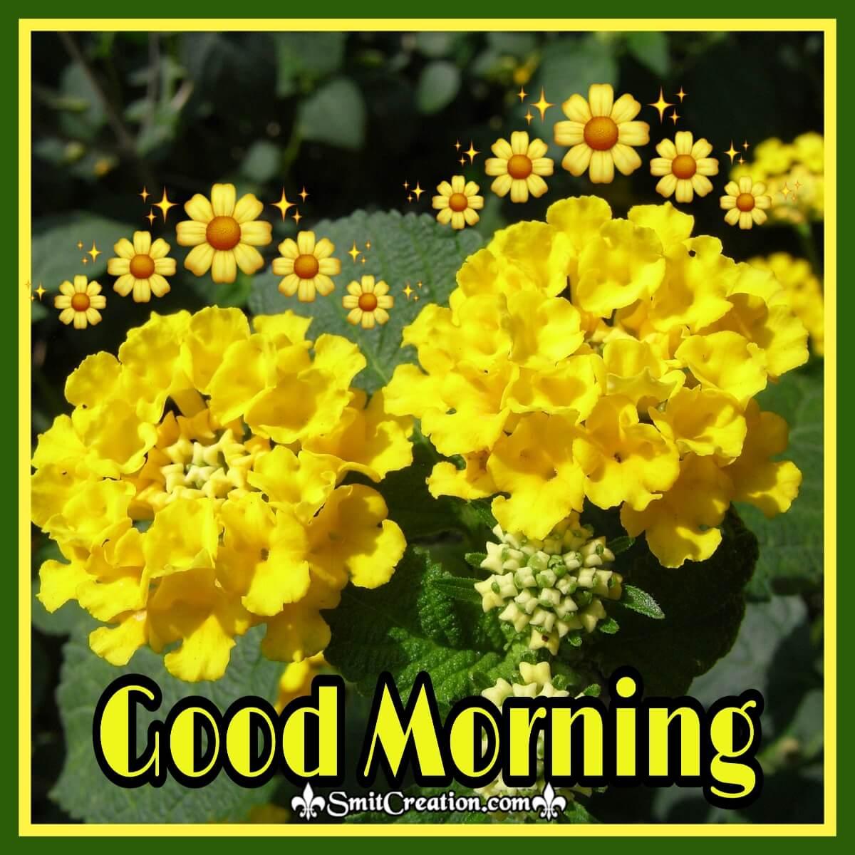 Good Morning Yellow Lantana Flowers